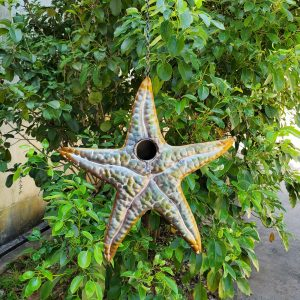 Galvanized Hanging Coastal Birdhouse - Starfish