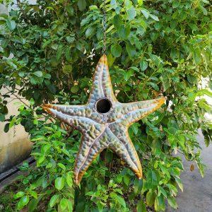 Galvanized Hanging Coastal Birdhouse - Starfish