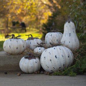 Set of 7 Rustic White Pumpkin Decorations